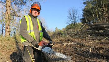 abattage massif d'arbres