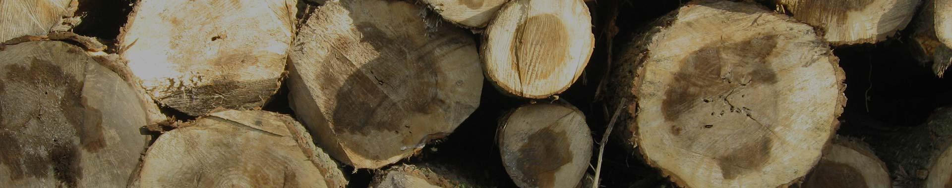 bois coupé