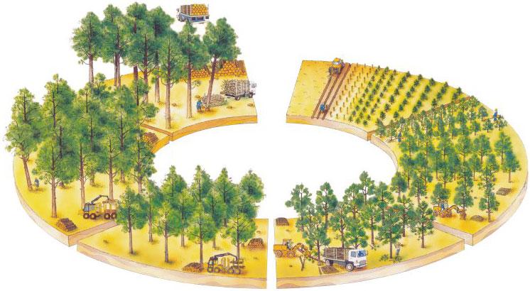 cycle de l'arbre